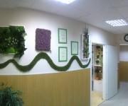 Стабилизированные цветы и растения в Самаре