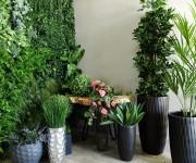 Стабилизированные цветы и растения в Астане