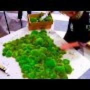 Зеленая стена из стабилизированного мха