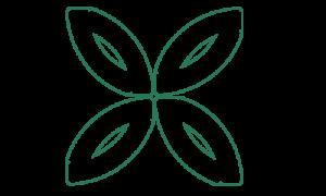 Стабилизированные цветы и растения в Гродно>