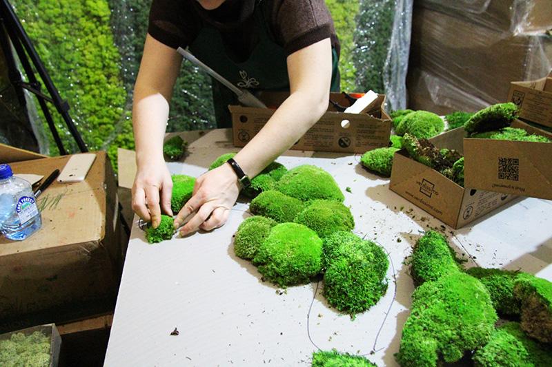 Озеленение мхом своими руками