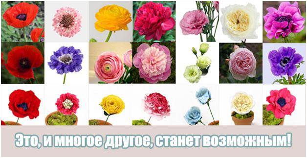 мастер-класс Трансформация цветка