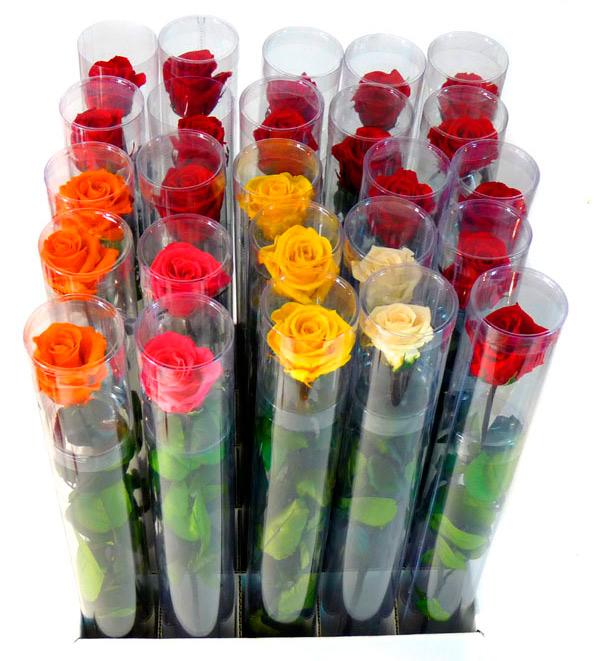 Розу стабилизированную купить